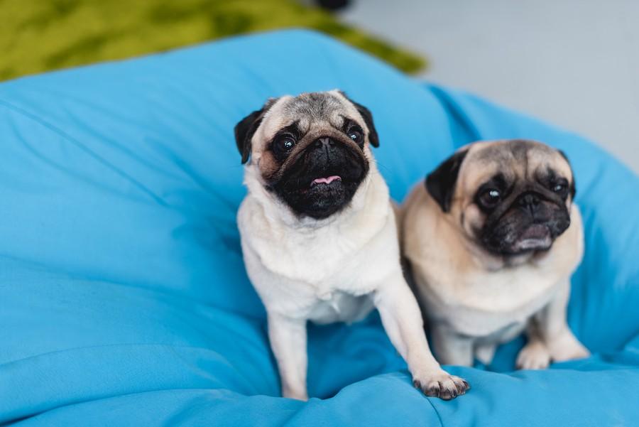 Sedací vak pro psa nebo kočku? Bezpečí a komfort pro vaše mazlíčky